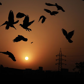 Sunrise by Debajit Bose - City,  Street & Park  Vistas ( bird, india, sunrise, landscape, morning )