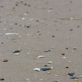 forgot time by Petrina Grimes - Nature Up Close Sand ( sand, colorful, seashells,  )