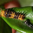 Dainty Swallowtail Butterfly Series
