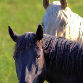 by Jennifer O'Keefe - Animals Horses