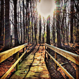 trees by Josh Pingel - Buildings & Architecture Bridges & Suspended Structures