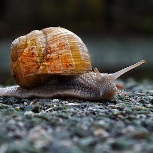 snail_mail_F7589_2012.jpg