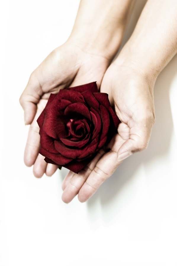 for you by Xyza Bacani - People Body Parts ( rose, nature, fine arts, flowers, pwchandsandfeet )