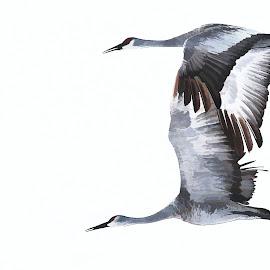 digital sandhill cranes by Rita Flohr - Digital Art Animals ( migration, cranes, digital art, birds, painting, sandhill cranes, birds in flight )