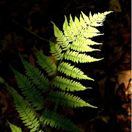 by Bob Wikert - Nature Up Close Leaves & Grasses
