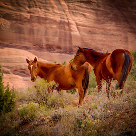 Wild in the canyon by Jan Wells - Animals Horses