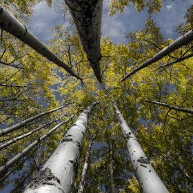 Real Trees.jpg