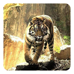 Tigers Live Wallpaper Icon