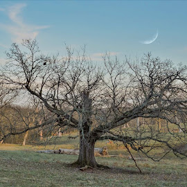 Years gone bye. by Jim Dawson - Novices Only Landscapes ( tree. field. landscape. kentucky. winter. moon. clouds. )