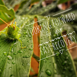 Get Well Soon by Erl de Jose - Typography Captioned Photos ( water drops, nature, green leaves, grasshopper, getwellsoon,  )
