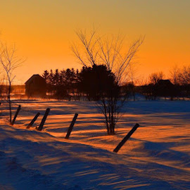 Sunset by Thomas Latham - Landscapes Prairies, Meadows & Fields ( sunset sun winter fence country,  )