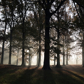 Backlit Forest by Sandra Rust - Landscapes Forests ( trees, forest, sun-rays through the trees )
