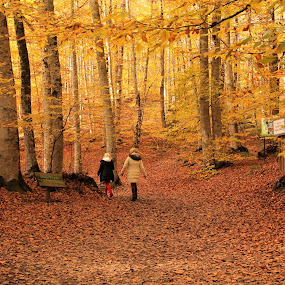 Sonbahar by Recep Cenbek - Landscapes Forests ( manzara, sonbahar, orman, sarı )