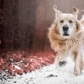 Dinner ! :) by Kasia Doroszkiewicz - Animals - Dogs Playing