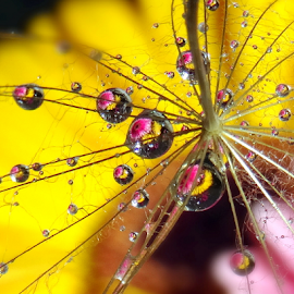 by Biljana Nikolic - Nature Up Close Natural Waterdrops