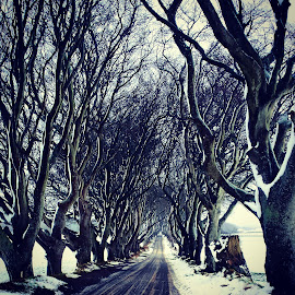 The Dark Hedges in winter by Dale Lufc - Landscapes Prairies, Meadows & Fields ( relax, tranquil, relaxing, tranquility )