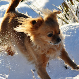 by Kathe Brorsson - Animals - Dogs Running