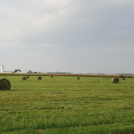 rolled bales of hay by Anne Mangen - Landscapes Prairies, Meadows & Fields