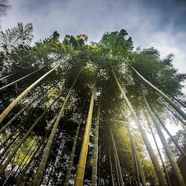 Bamboo - GoPro by Kendra Gaines - Landscapes Forests ( bamboo, japan, hdr, plants, asia, forest, go pro, gopro hero )
