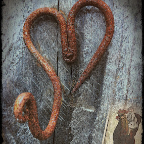In the barn by Pam Blackstone - Digital Art Things ( chicken, hook, heart, wood, old wood, rooster, rust, iron,  )