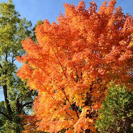 Autumn at Quebec city by Réal Michaud - City,  Street & Park  City Parks ( orange, red, nature, park, autumn, outdoor, trees, cityscape, leaves, cute, landscape )