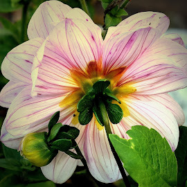 The  light  side by Gordon Simpson - Flowers Single Flower