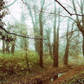Morning fog by Michal Fokt - City,  Street & Park  City Parks ( fog )