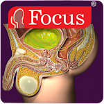 Urology - Medical Dictionary v1.3