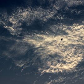 The Skylark by Mrinmoy Ghosh - Landscapes Cloud Formations (  )