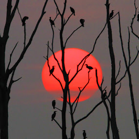 9/1/12 sunrise by Roger Becker - Landscapes Sunsets & Sunrises ( nature, tree, sunset, sunrise, birds, golden hour )