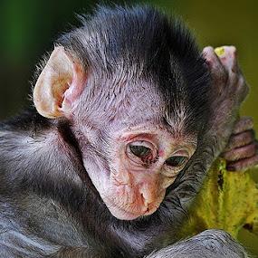 Depressed by Helnis Susanto Johannis - Animals Other Mammals
