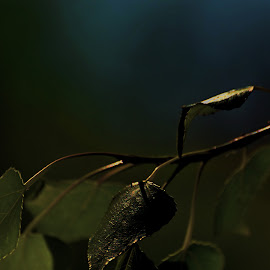 fragile light by Marian Enache - Nature Up Close Other plants