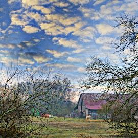 Field by Angela Everett - Landscapes Prairies, Meadows & Fields ( farm, field, barn, horse, trees )