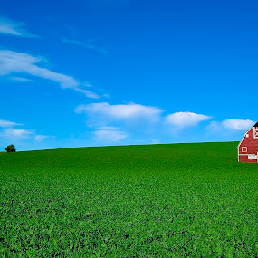 Palouse Country Barn by Clement Stevens - Landscapes Prairies, Meadows & Fields ( clouds, palouse, red, tree, blue, green )