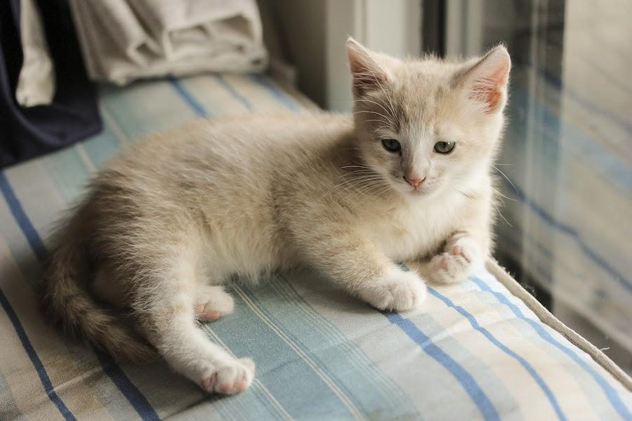 Leopold by Juli Paul - Animals - Cats Kittens ( cats, cat, kitten, kittens, cute )