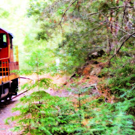 Skunk Train Movin' by Becky Luschei - Transportation Trains ( looking, movin', toward, locomotive, northspur, skunk train, up )