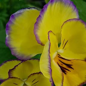 by Jolene Schack Dommer - Flowers Single Flower (  )