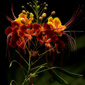 Enchantress by Linda Tiepelman - Nature Up Close Flowers - 2011-2013