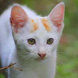 by Kanchan D - Animals - Cats Kittens