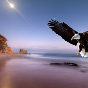Eagle Landing  by John CHIMON - Digital Art Places