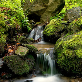 by Siniša Almaši - Nature Up Close Water ( water, up close, stream, green, forest, landscape, spring, colours, nature, cascade, trees, view, stones, rocks, light, river )