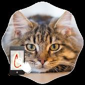 Gesture Lock Screen Cat