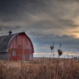 November Sun by Chad Heggen - Buildings & Architecture Decaying & Abandoned ( clouds, red, barn, grass, faded, weeds, tin, abandoned, left to rot )