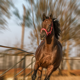 action by Walid Shahin - Animals Horses ( horse, running, action )