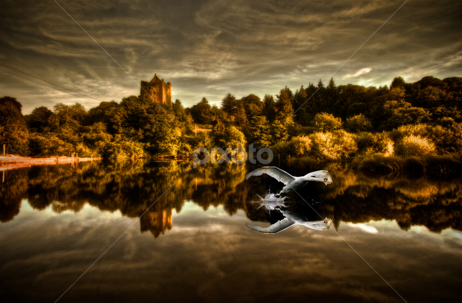 Reflections by Adrian O'Neill - Landscapes Waterscapes ( the fall, swan, reflections, castle, river,  )
