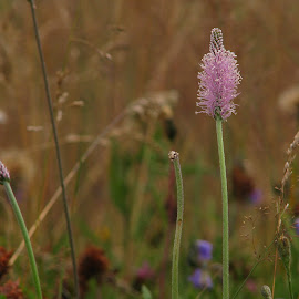 *** by Adriana Petcu - Nature Up Close Other plants ( macro, nature, grass, nature up close, flower )