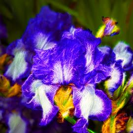 fractal iris by LADOCKi Elvira - Digital Art Things