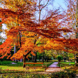 Park at Padova by Hariharan Venkatakrishnan - City,  Street & Park  City Parks