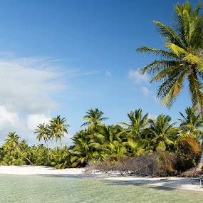 Coconut paradise by Clarissa Human - Landscapes Beaches ( coconut trees, tropical plants, tropical, cloudscape, beach, paradise, white sand,  )