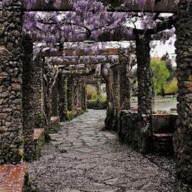 A Pérgola by Ana Batista Constantino - City,  Street & Park  City Parks ( jardins, cidade, rua, lugares )
